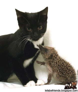 amores inusuales raros animales 22