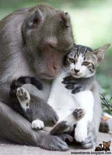 amores inusuales raros animales 23