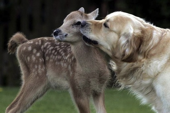amores inusuales raros animales 27