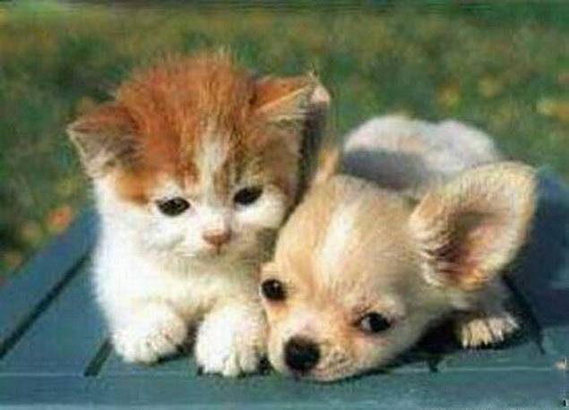 amores inusuales raros animales 28