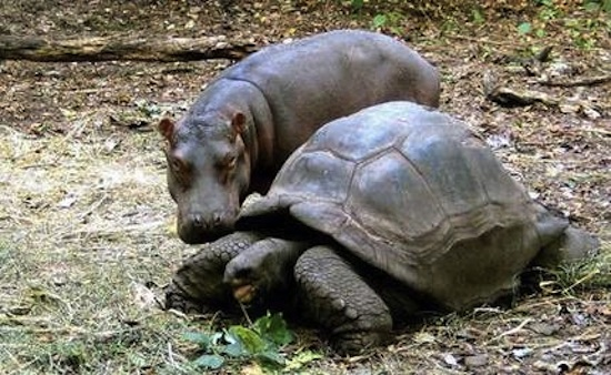 amores inusuales raros animales 29
