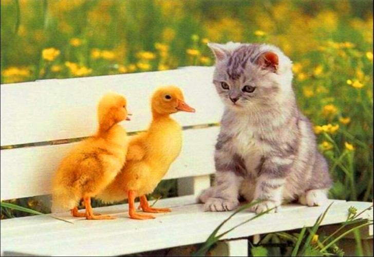 amores inusuales raros animales 31