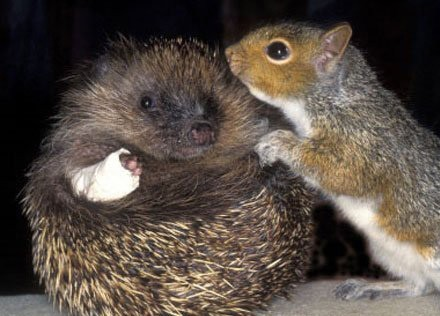 amores inusuales raros animales 33