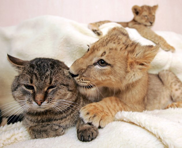 amores inusuales raros animales 34
