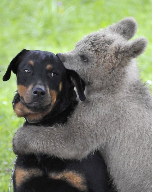 amores inusuales raros animales 38