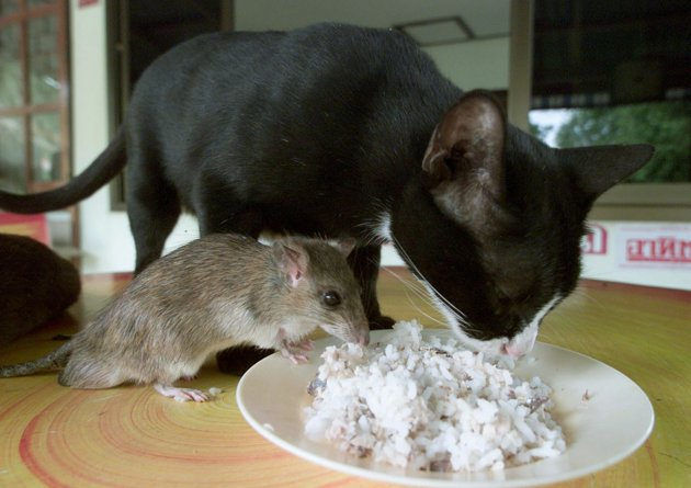 amores inusuales raros animales 41