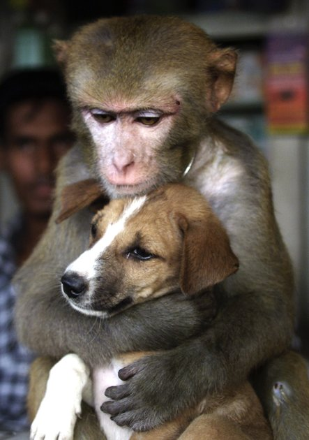 amores inusuales raros animales 42
