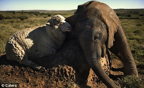 amores inusuales raros animales 46