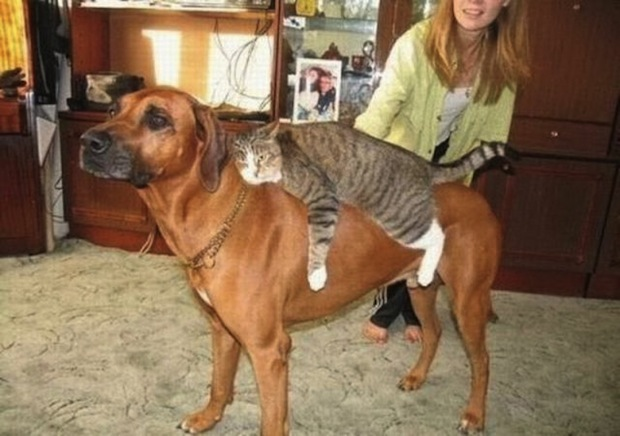 amores inusuales raros animales 49
