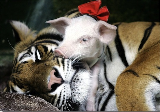 amores inusuales raros animales 53
