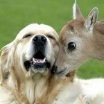 Amores raros e inusuales entre animales