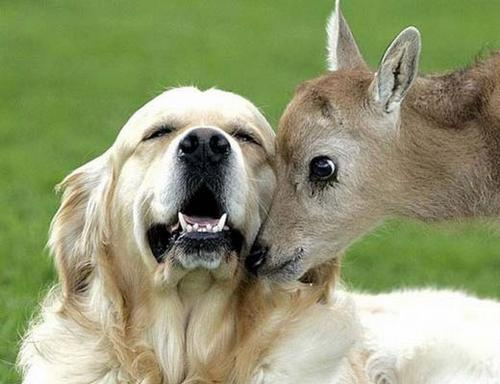 amores inusuales raros animales 54