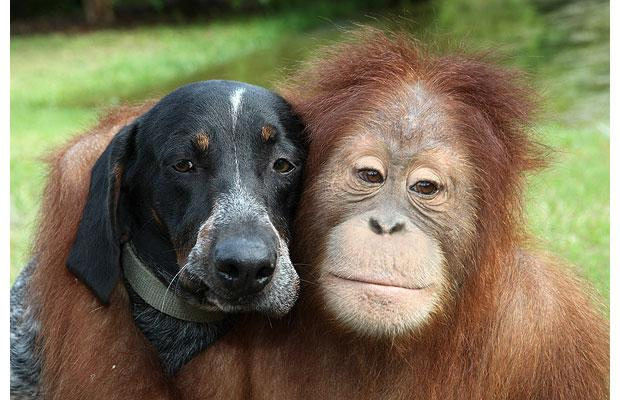amores inusuales raros animales 55