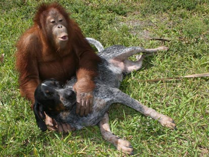 amores inusuales raros animales 56