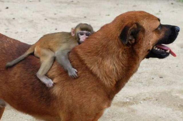amores inusuales raros animales 60
