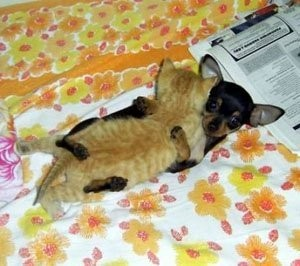amores inusuales raros animales 61