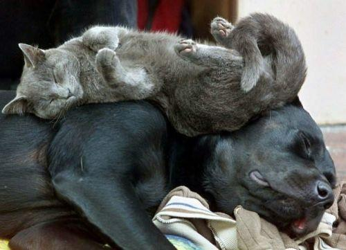 amores inusuales raros animales 62