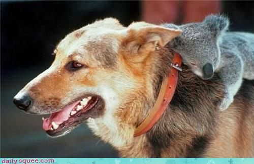 amores inusuales raros animales 63
