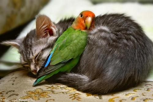 amores inusuales raros animales 64