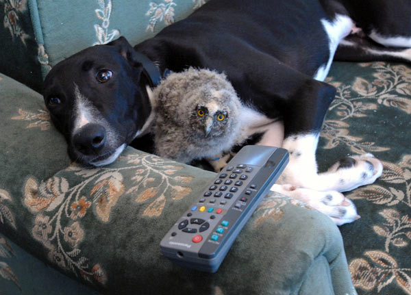 amores inusuales raros animales 66