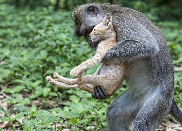 amores inusuales raros animales 67