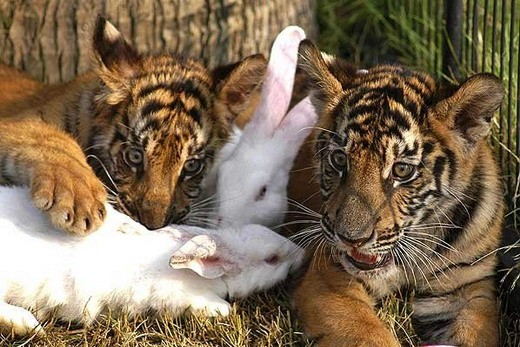 amores inusuales raros animales 70