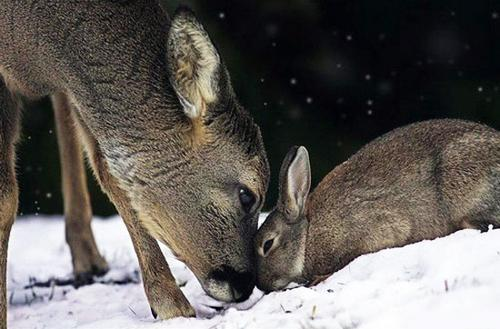 amores inusuales raros animales 72