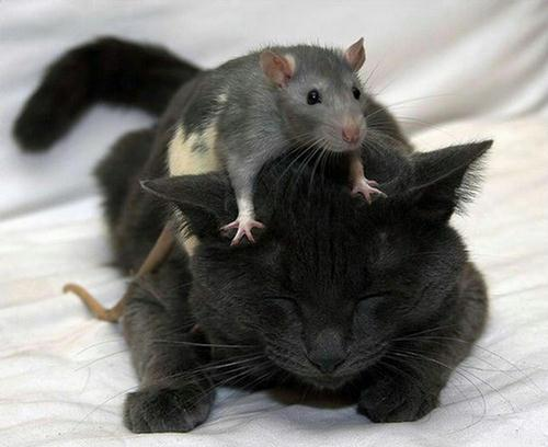 amores inusuales raros animales 73