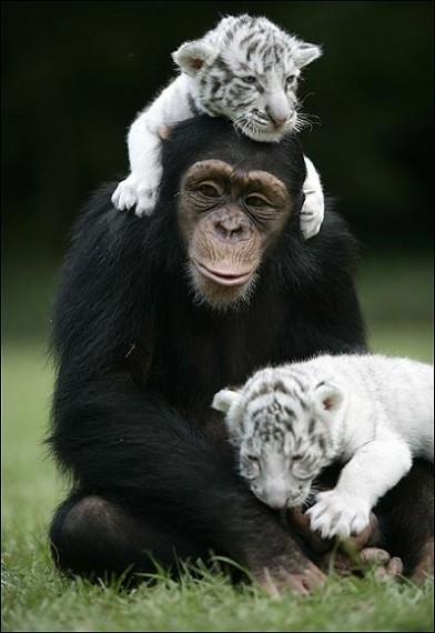 amores inusuales raros animales 74
