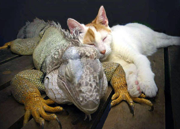 amores inusuales raros animales 76