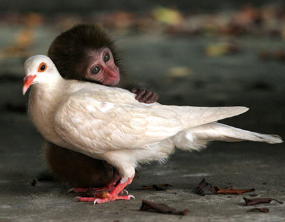 amores inusuales raros animales 77