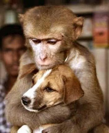 amores inusuales raros animales 78