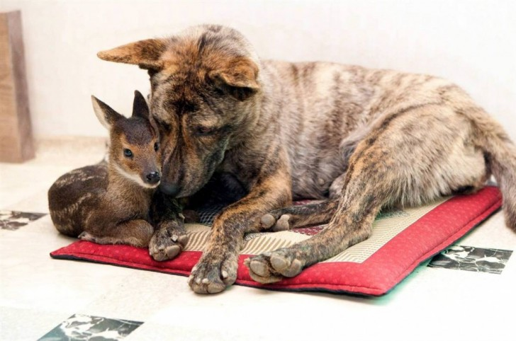amores inusuales raros animales 80