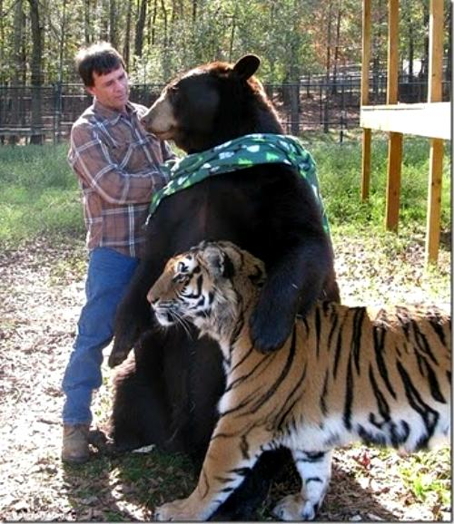 amores inusuales raros animales 81