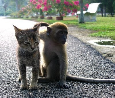 amores inusuales raros animales 82