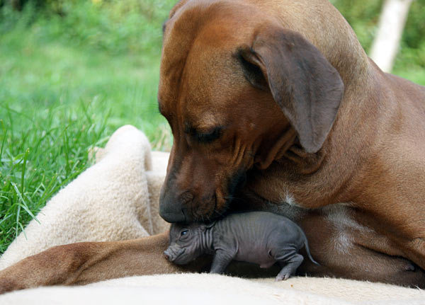 amores inusuales raros animales 85