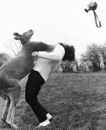 animales graciosos canguro