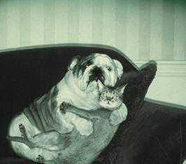 animales graciosos gato perro pillados