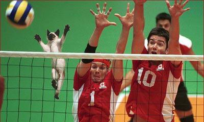 animales graciosos gato voleibol