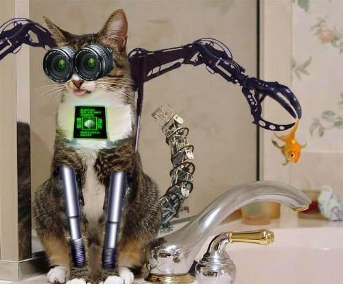 animales graciosos gatos