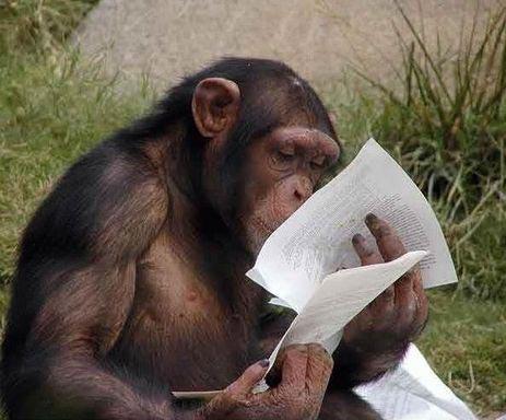 animales graciosos mono leyendo
