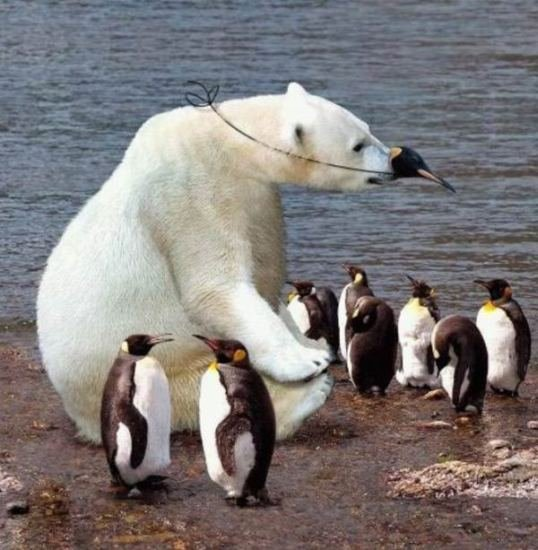 animales graciosos oso polar pinguinos