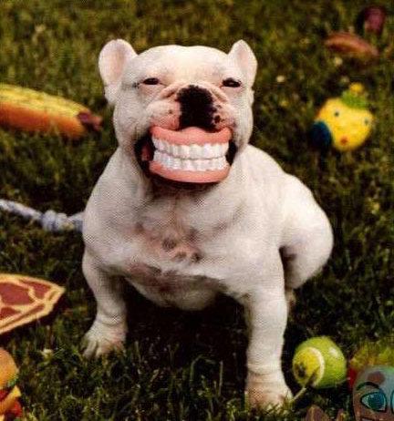 animales graciosos perro dentadura postiza