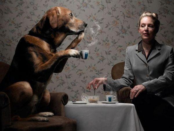 animales graciosos perro tomando te