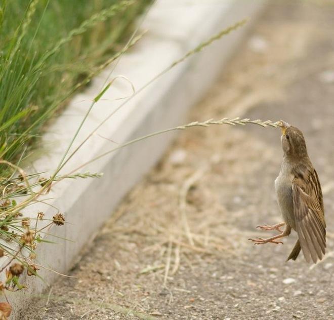 imagenes fotografias pajaros aves 02