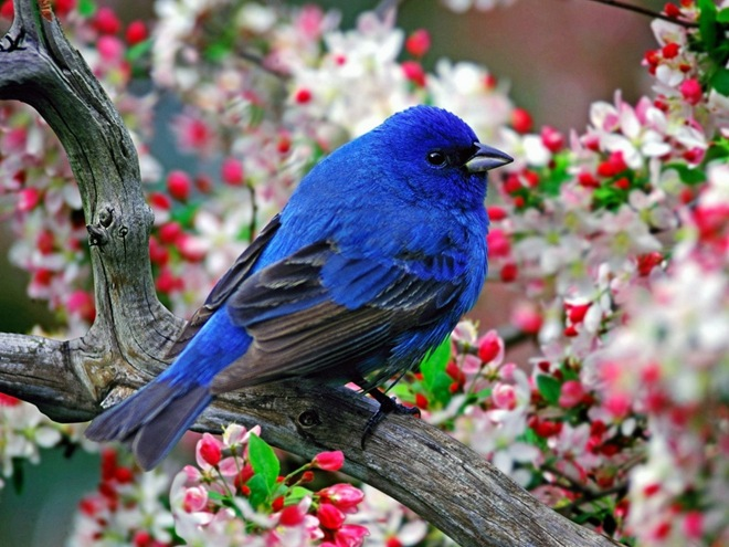 imagenes fotografias pajaros aves 04