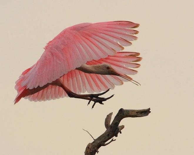 imagenes fotografias pajaros aves 06