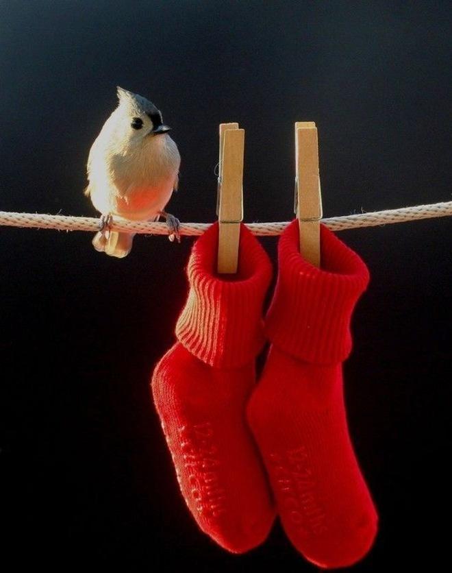 imagenes fotografias pajaros aves 07