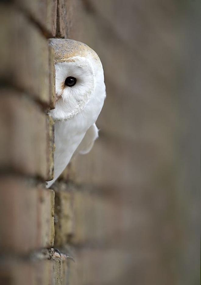 imagenes fotografias pajaros aves 08