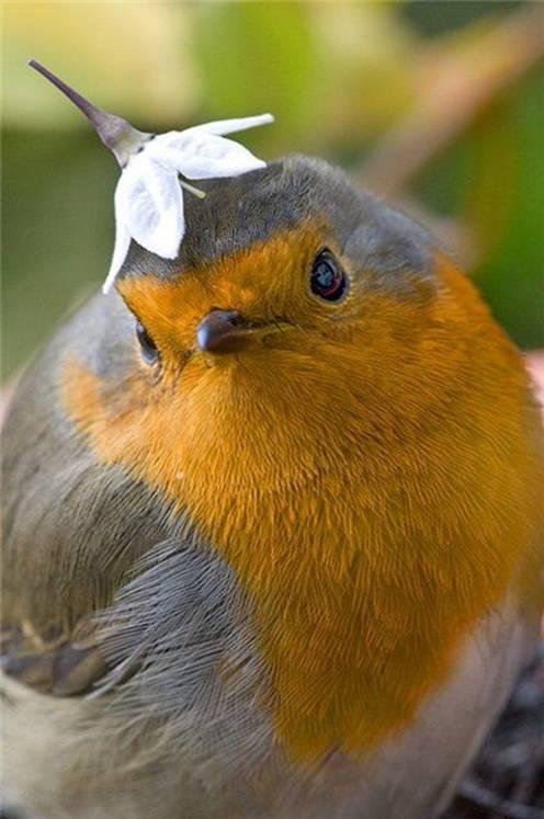 imagenes fotografias pajaros aves 09